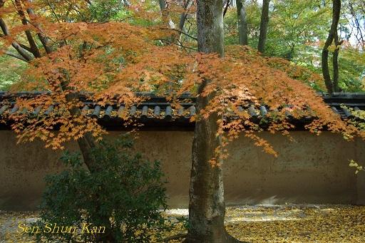 下鴨神社の紅葉_a0164068_120487.jpg