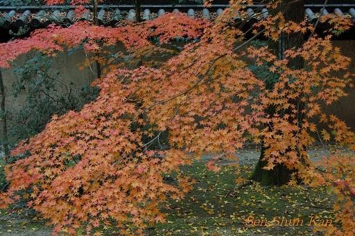 下鴨神社の紅葉_a0164068_1211263.jpg