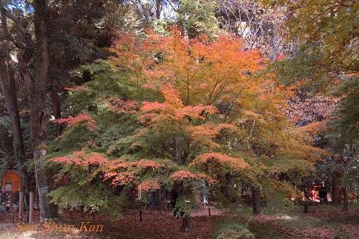下鴨神社の紅葉_a0164068_1214325.jpg