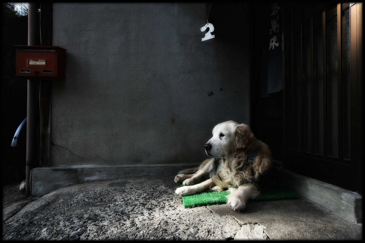 犬わん_f0021869_22141927.jpg