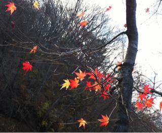 鬼怒川温泉旅行のiPhone photo_e0046675_23391112.jpg