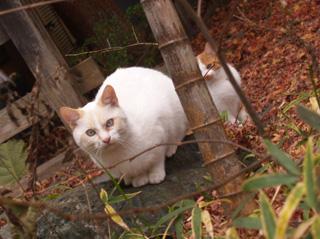 鬼怒川温泉旅行のiPhone photo_e0046675_23402867.jpg