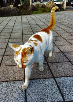 鬼怒川温泉旅行のiPhone photo_e0046675_23403577.jpg