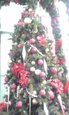ツリー・tree・つりー_d0062076_13552092.jpg