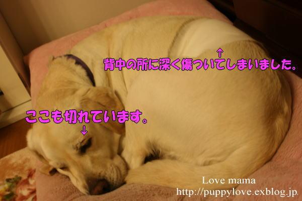 b0136683_21461010.jpg
