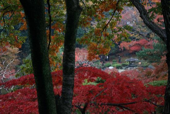 旧古河庭園の日本庭園_f0030085_21272639.jpg