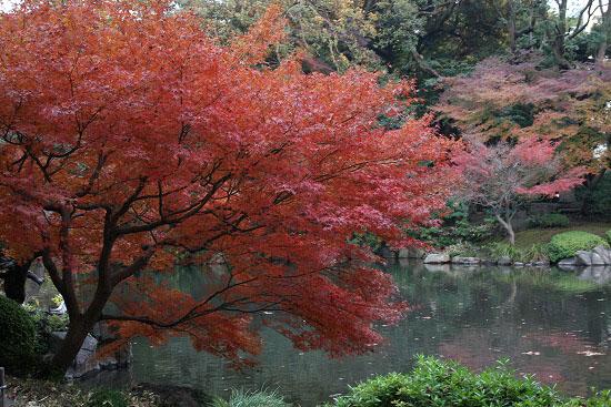 旧古河庭園の日本庭園_f0030085_21275150.jpg