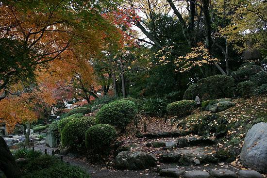 旧古河庭園の日本庭園_f0030085_21284323.jpg
