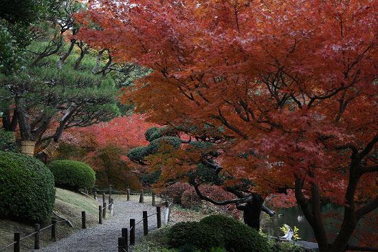 旧古河庭園の日本庭園_f0030085_2128756.jpg