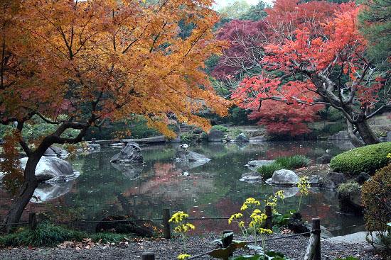 旧古河庭園の日本庭園_f0030085_21291079.jpg