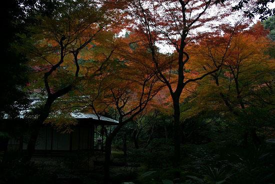 旧古河庭園の日本庭園_f0030085_21295254.jpg