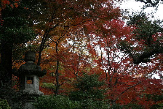旧古河庭園の日本庭園_f0030085_2130766.jpg