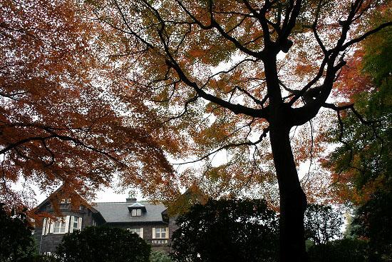 旧古河庭園の日本庭園_f0030085_21311477.jpg