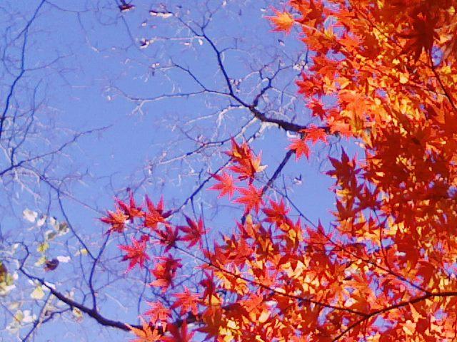 ■紅葉の中での、「一人宴会」風流なる楽しみ_c0061686_7563887.jpg
