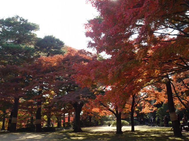 2010紅葉第二弾、殿ヶ谷戸庭園です、ここも見事\(^▽^)/_b0175688_10142949.jpg