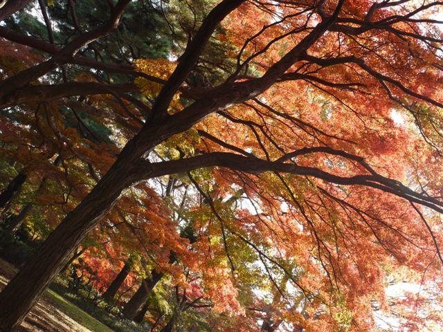 2010紅葉第二弾、殿ヶ谷戸庭園です、ここも見事\(^▽^)/_b0175688_10443258.jpg