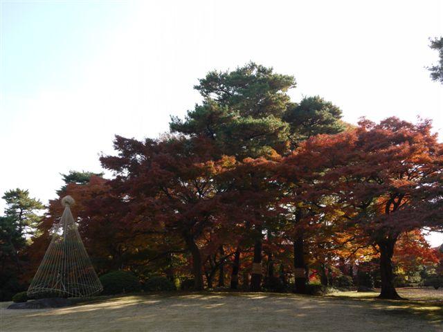 2010紅葉第二弾、殿ヶ谷戸庭園です、ここも見事\(^▽^)/_b0175688_10444744.jpg