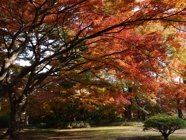 2010紅葉第二弾、殿ヶ谷戸庭園です、ここも見事\(^▽^)/_b0175688_10445642.jpg