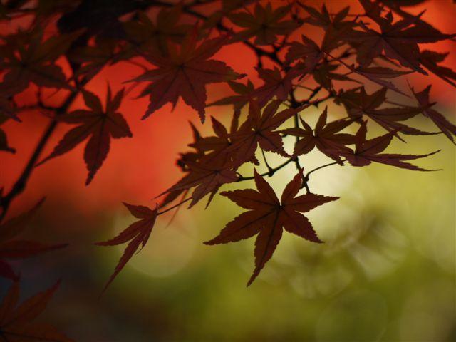2010紅葉第二弾、殿ヶ谷戸庭園です、ここも見事\(^▽^)/_b0175688_10454461.jpg