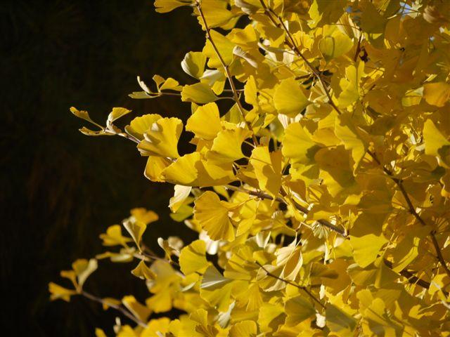 2010紅葉第二弾、殿ヶ谷戸庭園です、ここも見事\(^▽^)/_b0175688_10463994.jpg