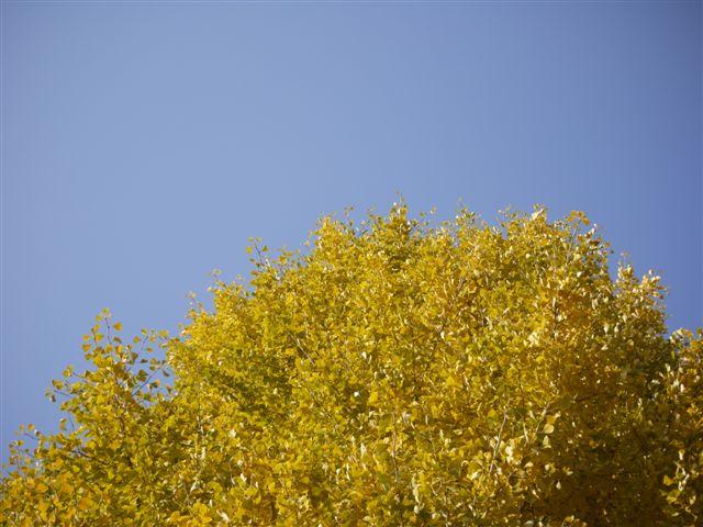 2010紅葉第二弾、殿ヶ谷戸庭園です、ここも見事\(^▽^)/_b0175688_10464835.jpg