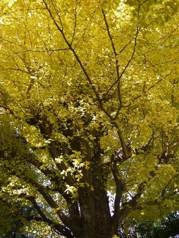 2010紅葉第二弾、殿ヶ谷戸庭園です、ここも見事\(^▽^)/_b0175688_10470100.jpg