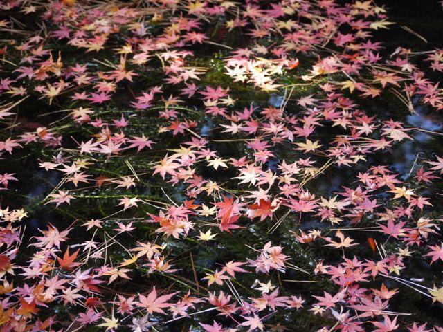 2010紅葉第二弾、殿ヶ谷戸庭園です、ここも見事\(^▽^)/_b0175688_10485710.jpg