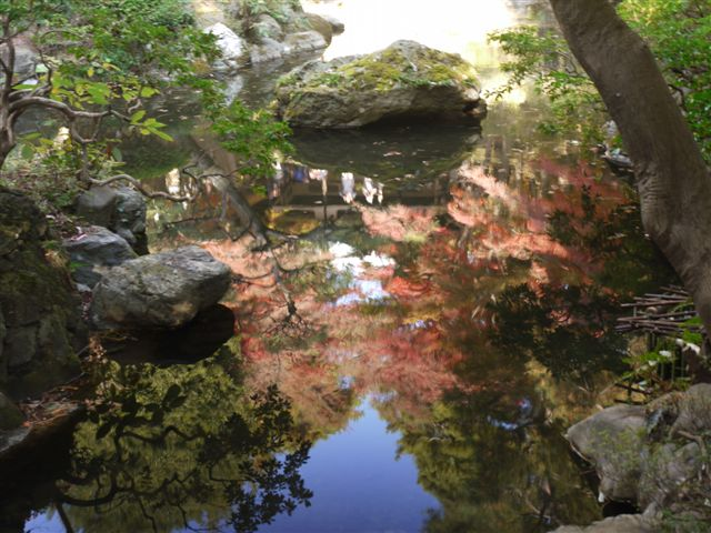 2010紅葉第二弾、殿ヶ谷戸庭園です、ここも見事\(^▽^)/_b0175688_10491954.jpg