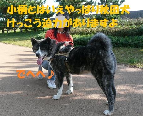 f0121712_8581114.jpg