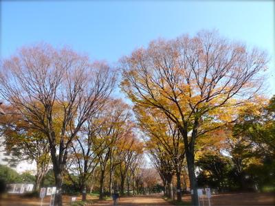 いい天気♪_d0060413_1530333.jpg