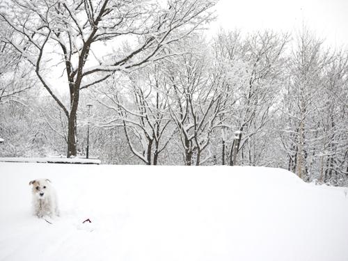 いっきに冬_f0032814_2351272.jpg