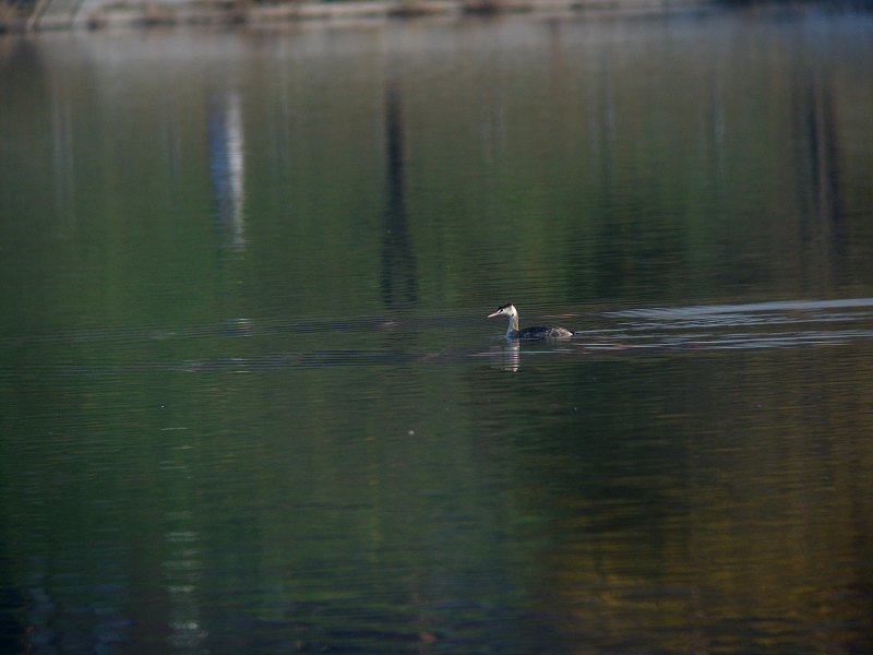 11/28  S湖にて_f0051915_2222840.jpg