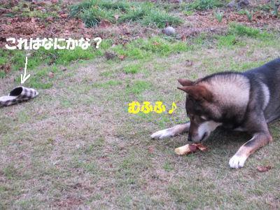 f0143123_2045335.jpg
