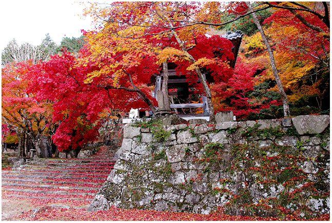 紅葉いっぱい_c0042324_10495761.jpg
