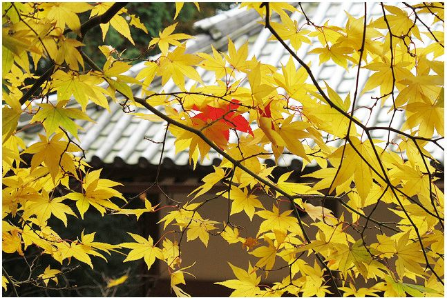 紅葉いっぱい_c0042324_1050767.jpg