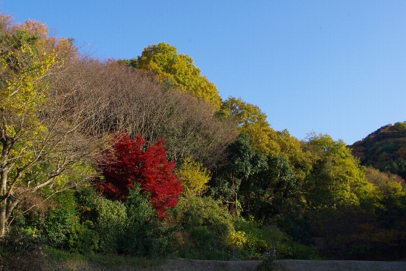 生駒山系縦走~_c0113733_23362732.jpg