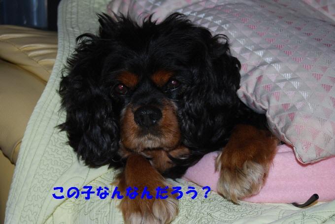 c0136838_22173513.jpg