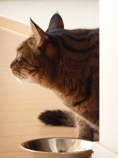 猫のお友だち みーくん編。_a0143140_21454182.jpg