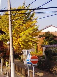 続・ 岐阜県への共同緊急要請と内ヶ谷・今川_f0197754_20314298.jpg