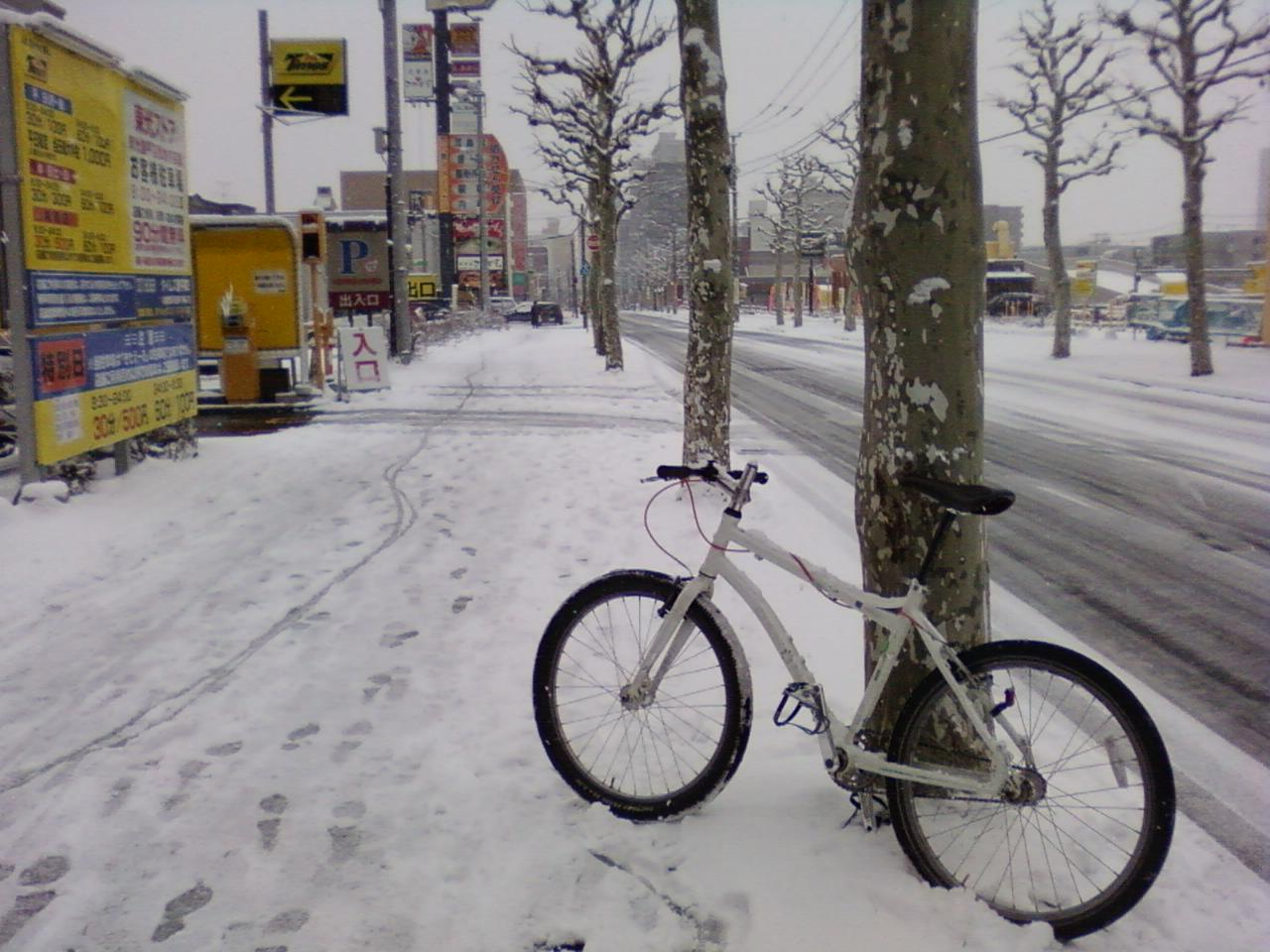 雪です  _d0197762_10461657.jpg