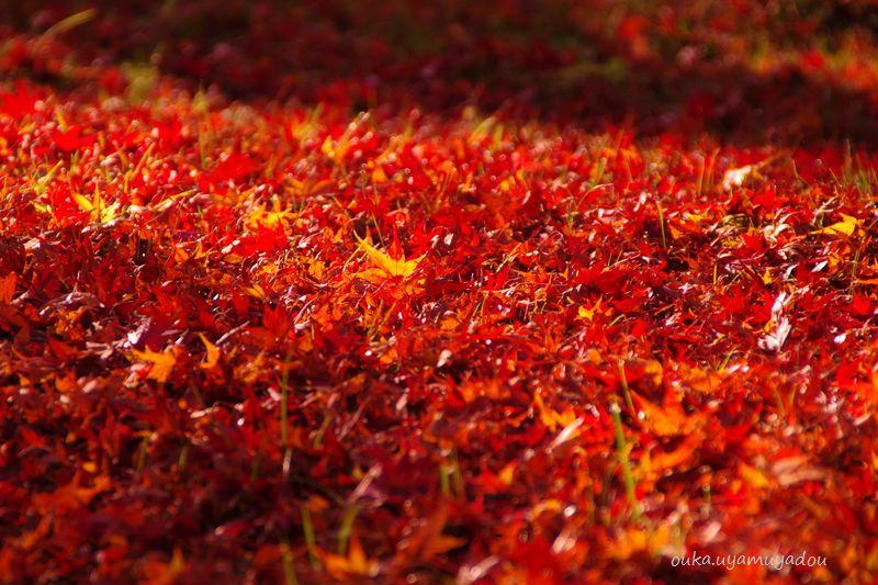 み~つけた・京都・秋の東福寺_a0157263_21203854.jpg