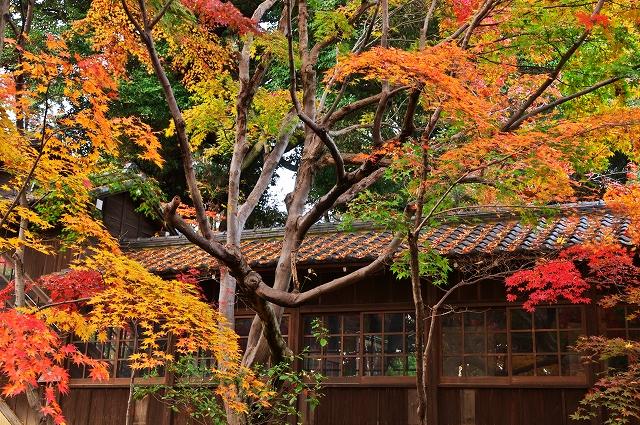 本土寺 2010秋 3_f0018464_743631.jpg