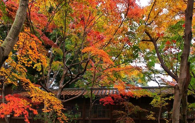本土寺 2010秋 3_f0018464_744815.jpg