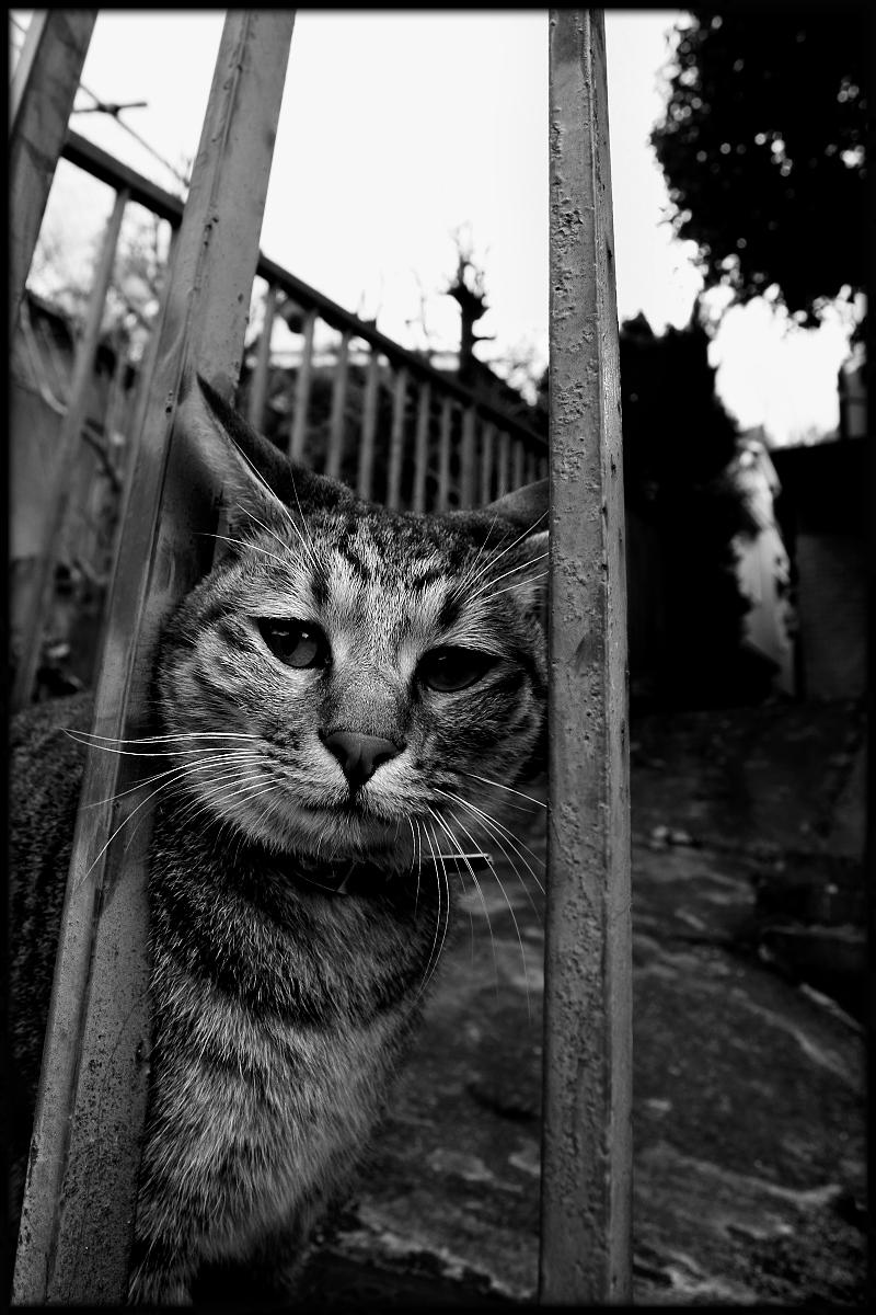 猫にゃん_f0021869_2245513.jpg