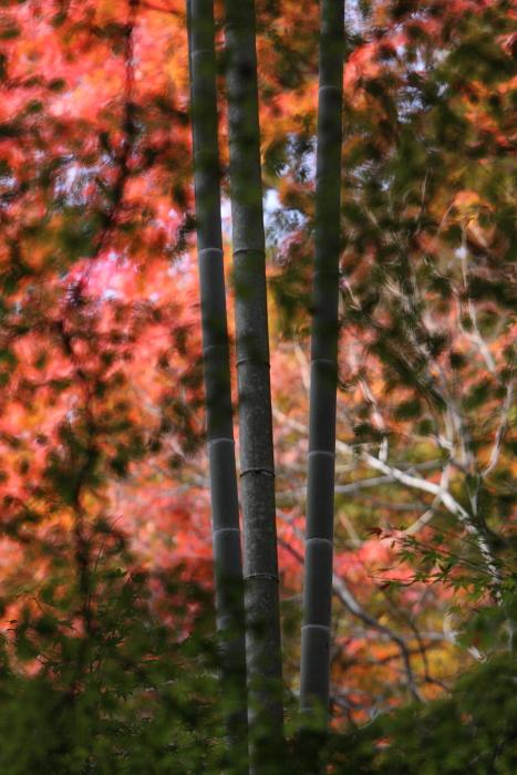 西山荘<2> 常陸太田市 2010年11月27日 撮影_e0143883_17525594.jpg