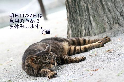 いつもの散歩道でコウテイヒマワリ_f0030085_2130337.jpg
