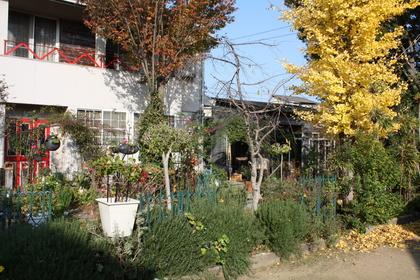 Loop 落ち葉の庭_a0155290_1012614.jpg