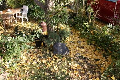 Loop 落ち葉の庭_a0155290_10181724.jpg
