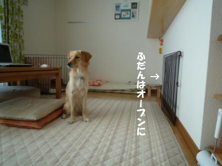 c0196992_1531811.jpg