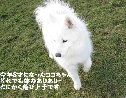 f0212597_8181898.jpg